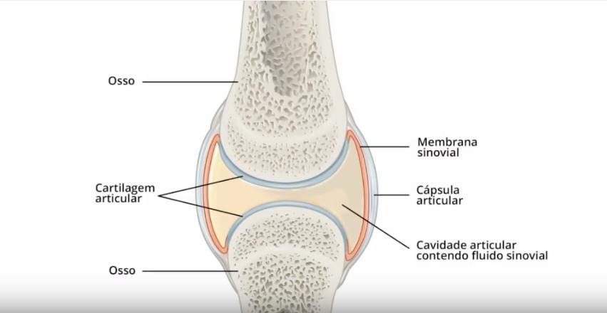 glucosamina para as articulações