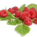 Cetonas de Framboesa (raspberry ketones) | O que é? Emagrece?