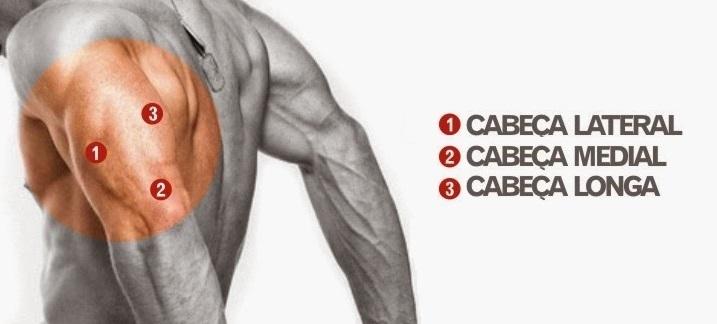 cabeças do triceps