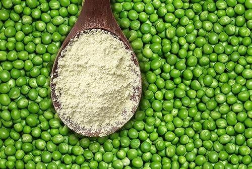 Proteína de Ervilha ou Whey Protein: qual a melhor para ganhar músculo?